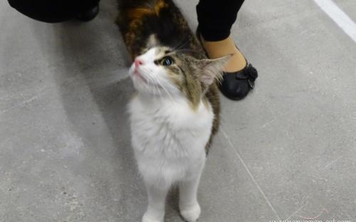 Trieste International Cat Show September 2014 4