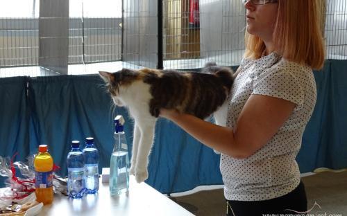 Trieste International Cat Show September 2014 6