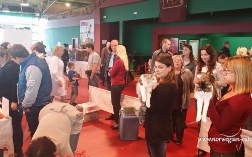 Zagreb International Cat Show May 2014 4