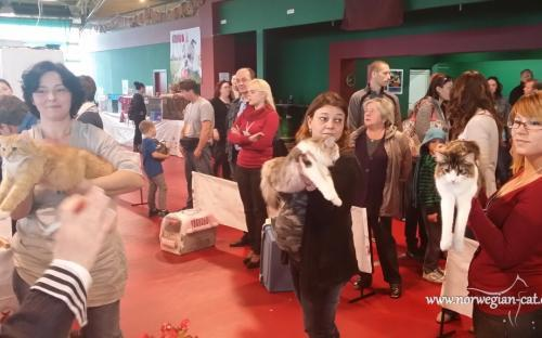 Zagreb International Cat Show May 2014 5